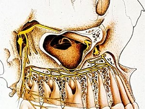 The Anatomical Foundation of Implant Surgery